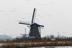 Skating Kinderdijk R de Roij02