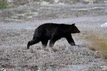 Ronald_de_roij_Jasper_bear_001