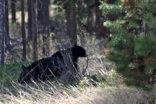 Ronald_de_roij_Jasper_bear_004