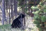 Ronald_de_roij_Jasper_bear_006