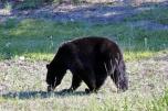 Ronald_de_roij_Jasper_bear_007