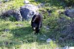 Ronald_de_roij_Jasper_bear_008