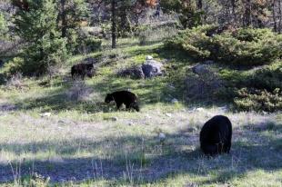 Ronald_de_roij_Jasper_bear_011