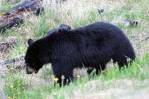 Ronald_de_roij_Jasper_bear_014
