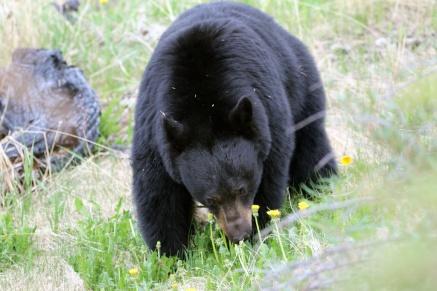 Ronald_de_roij_Jasper_bear_016