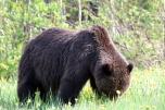 Ronald_de_roij_Jasper_bear_017