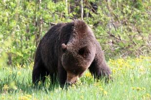 Ronald_de_roij_Jasper_bear_018