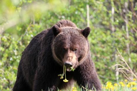 Ronald_de_roij_Jasper_bear_019