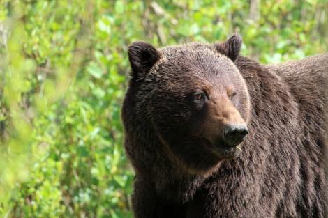 Ronald_de_roij_Jasper_bear_020