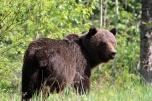 Ronald_de_roij_Jasper_bear_021